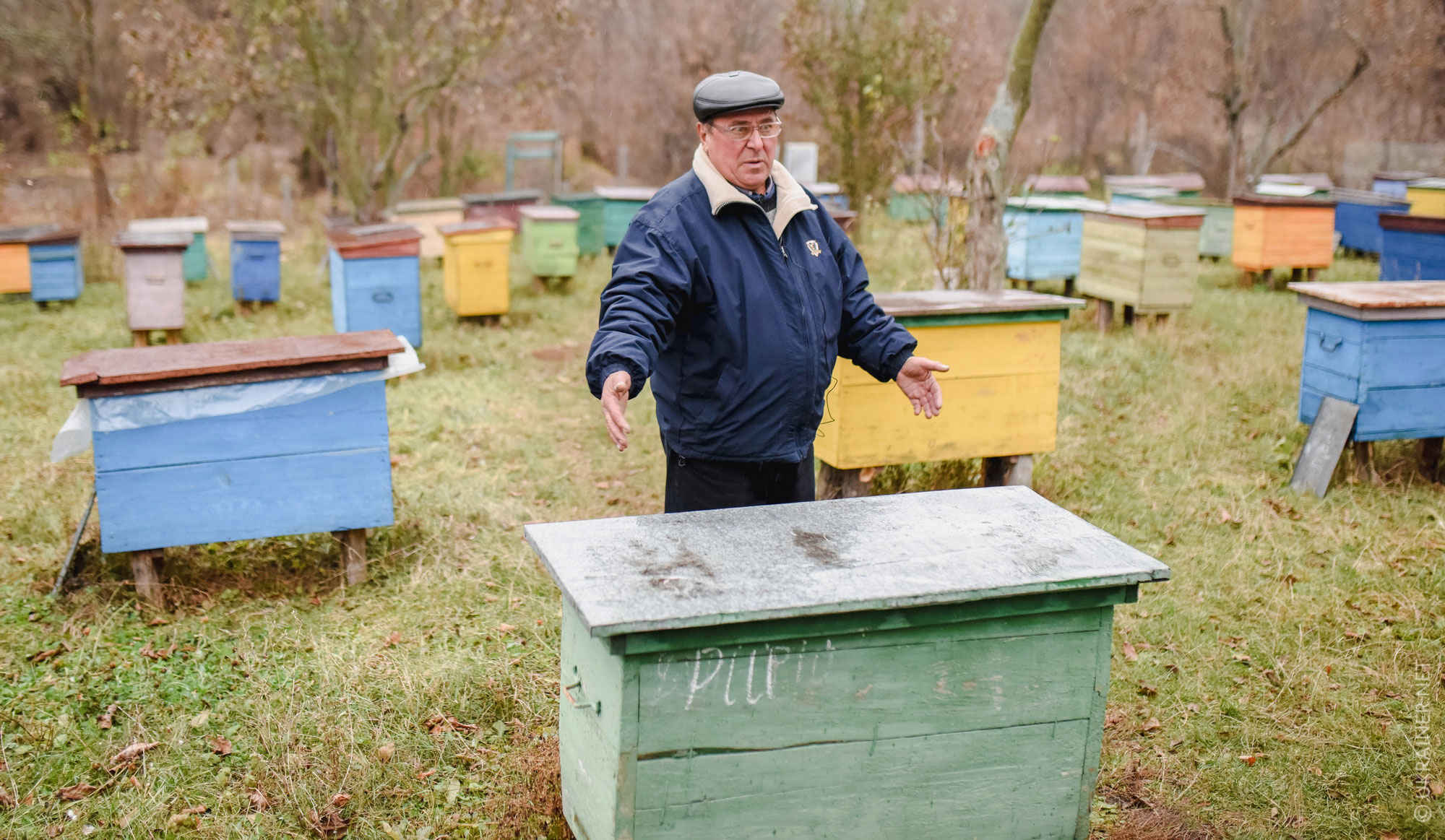 Hives instead of houses