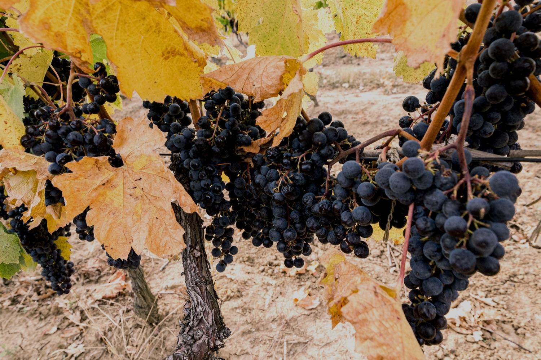 Le vin de Transcarpathie